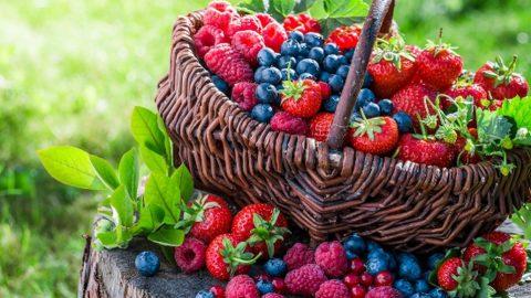 Vaisių ir uogų augintojai sulauks didesnės susietosios paramos