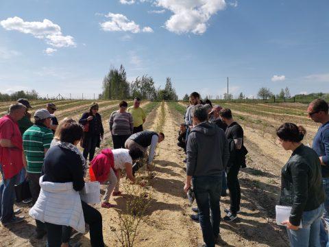 LUAA organizavo lauko dieną šilauogių augintojams
